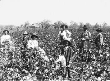 USA: Sklaven bei der Baumwollernte