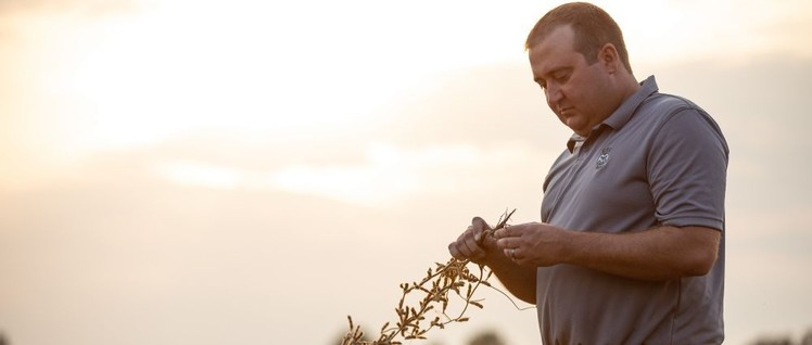 Farmer in den USA sind besorgt um den Absatz ihrer Soja-Bohnen.                          (Foto: United Soybean Board )