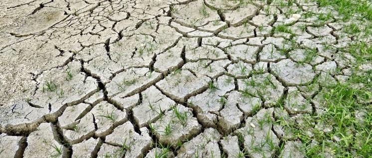 Dürre, Überschwemmungen, Extremwetter, Artensterben, Waldbrände … Was kostet der Klimawandel?