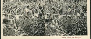 Sklaven, die zur Arbeit auf einer Zuckerrohr-Plantage unter Androhung schlimmster Strafen gezwungen wurden. (Foto: Ansichtskarte Fa. Knackstedt/wikimedia/ CC-PD_Mark)
