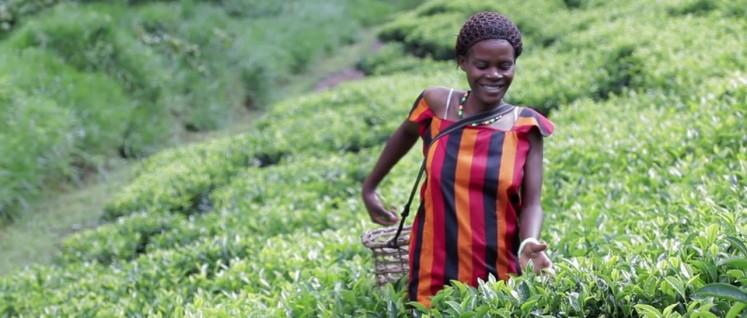 Der Selbstdarstellung der Gates-Stiftung zufolge haben alle was zu lachen: Die Stifter ebenso wie die Landfrau in Uganda. (Foto: vimeo)