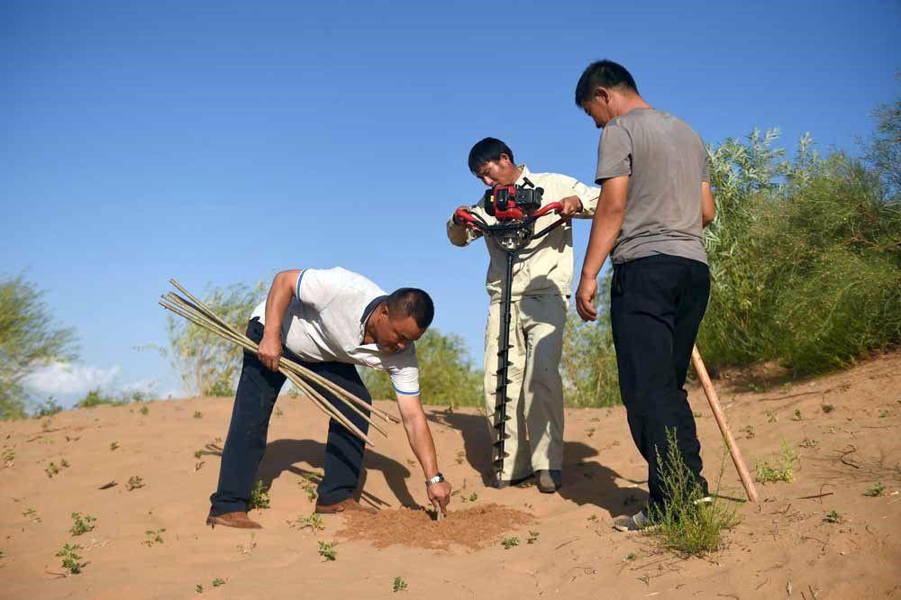 Wald statt Wüste – China setzt auf Aufforstung gegen den Klimawandel.