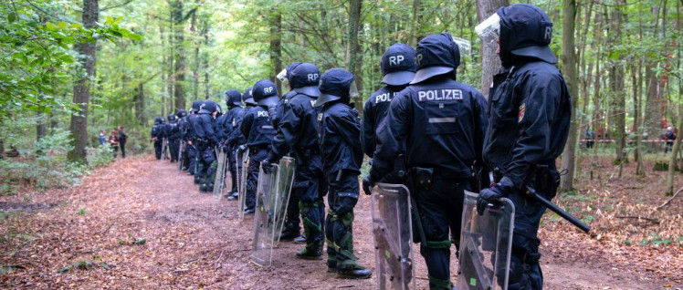 Im Hambacher Forst (Foto: Hubert Perschke / r-mediabase.eu)