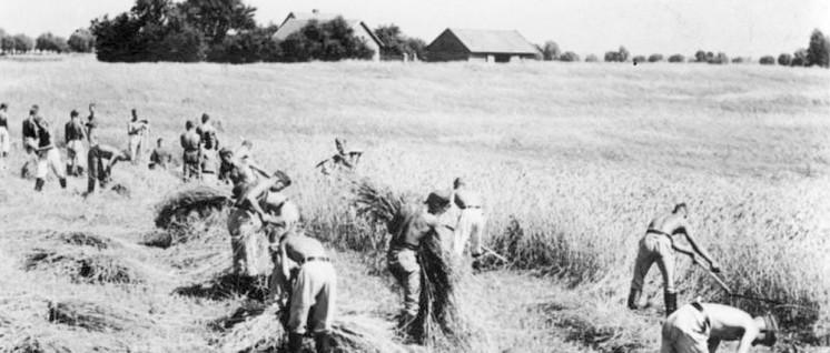 Arbeitsmarktpolitik für das Kapital in Nazi-Deutschland: Ernteeinsatz des Reichsarbeitsdienstes in Ostpreußen (Foto: Bundesarchiv, Bild 146–1987-085–19/CC-BY-SA 3.0)