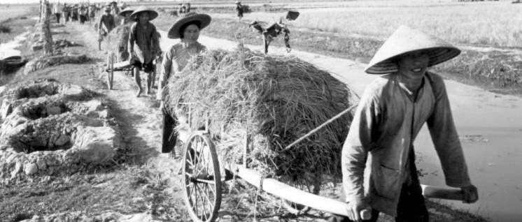 6.12.1967: Die Genossenschaftsbauern bringen die zweite Reisernte des Jahres ein. Links sieht man Ein-Mann-Deckungslöcher. (Foto: Irene Feldbauer)